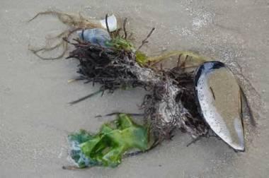 beachcomp1